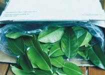 How To Freeze Kaffir Lime Leaves