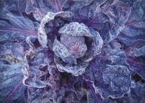 Freeze Red Cabbage